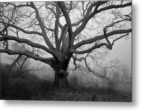 Ancient Oak Tree V - Sheep Pasture Metal Print