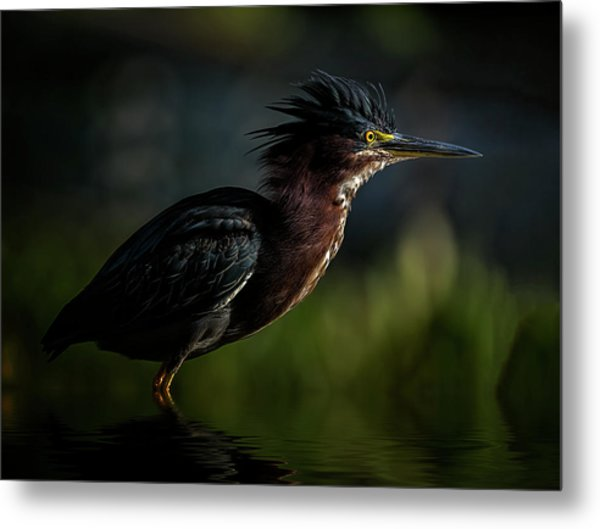 Another Bad Hair Day Metal Print
