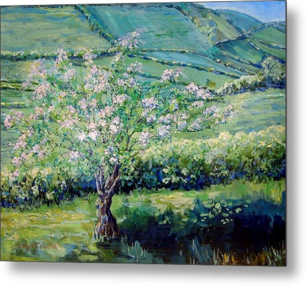 Apple Blossom In The Valley Metal Print by Wendy Head