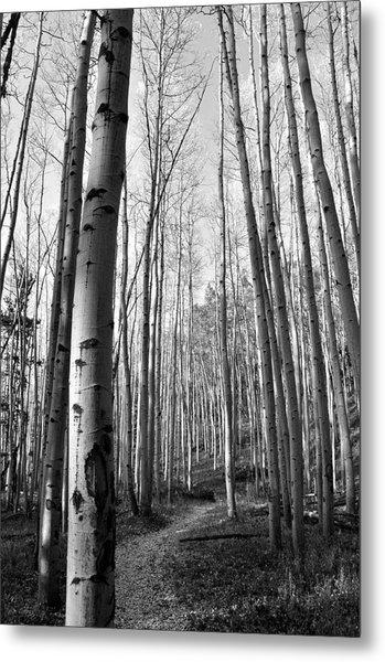 Aspen Trail Metal Print by Tobin Truslow