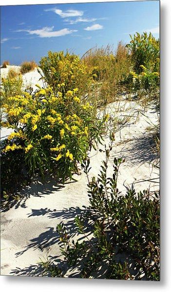 Assateague Beach 5 Metal Print by Alan Hausenflock