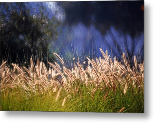 At The Rock Garden Tel Aviv Metal Print