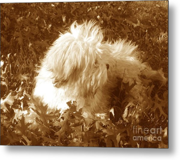 Autumn Breeze 2 Metal Print by Reina Resto