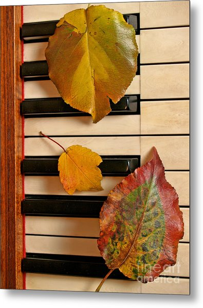 Autumn Leaf Trio On Piano Metal Print by Anna Lisa Yoder