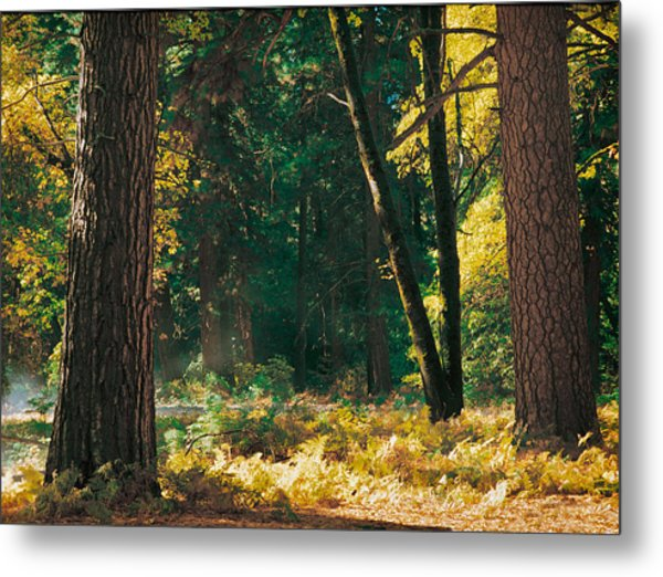 Autumn Morning Yosemite National Park Metal Print by Edward Mendes