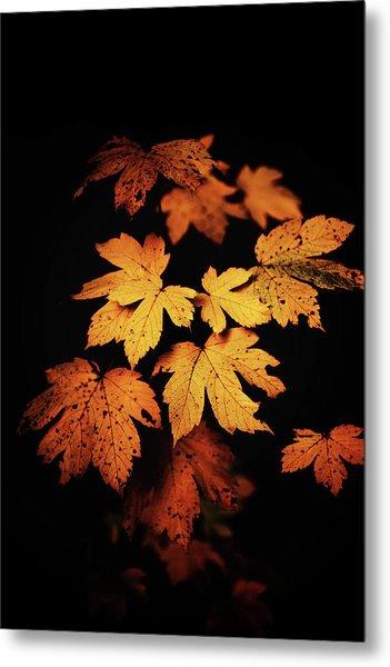 Autumn Photo Metal Print