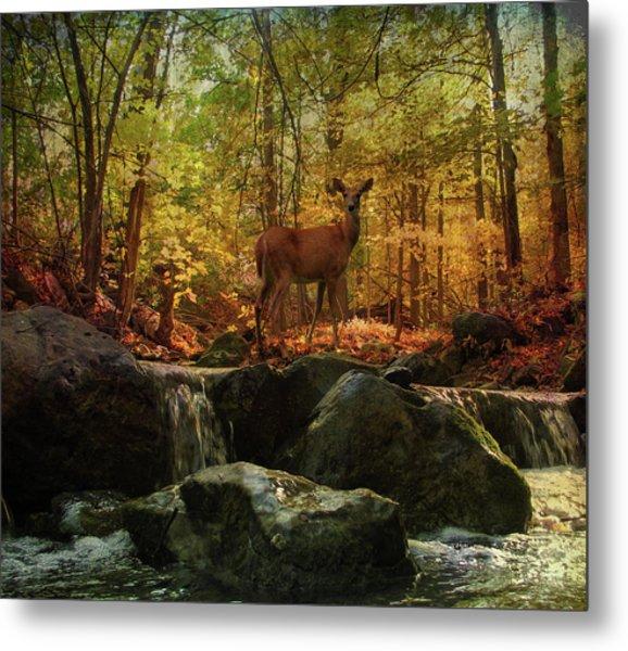 Autumn Splendor Metal Print by Kathleen Holley