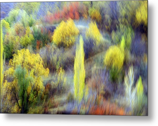 Autumnal Metal Print by Robert Shahbazi