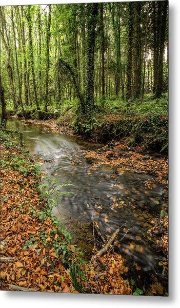 Autumnal Stream Metal Print