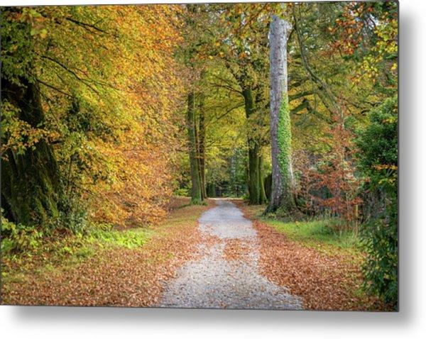 Autumnal Walkway Metal Print
