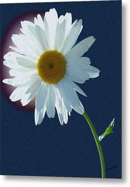 Backlit Daisy Metal Print