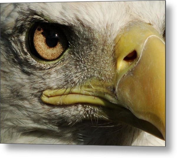Bald Eagle Eye Metal Print