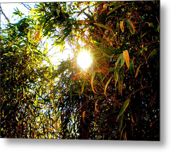 Bamboo Trees In Atlanta Metal Print