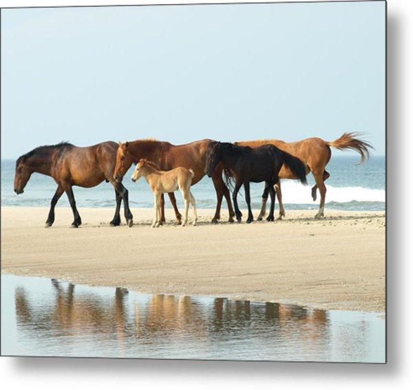 Banker Horses - 1 Metal Print