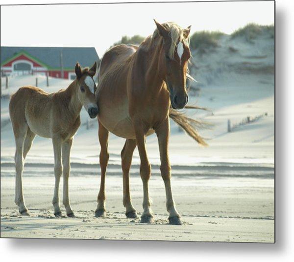 Banker Horses - 3 Metal Print