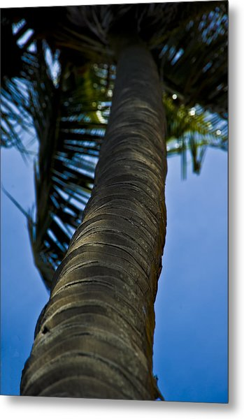 Barking Up The Wrong Tree Metal Print by Sarita Rampersad