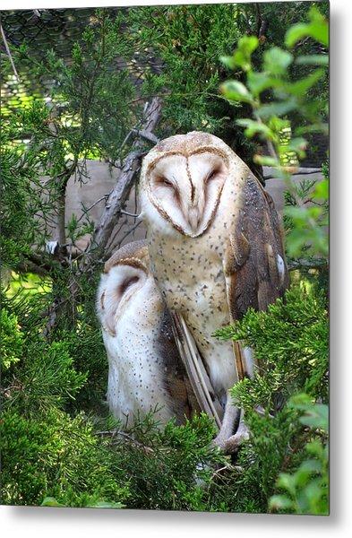 Barn Owls Metal Print by George Jones