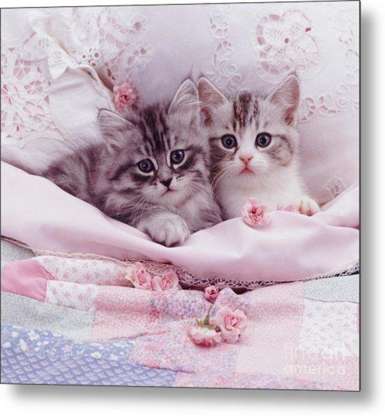 Bedtime Kitties Metal Print