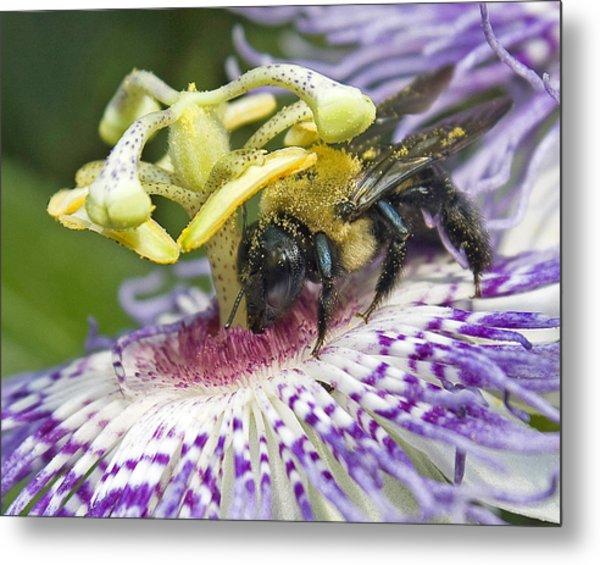 Bee At Work Metal Print