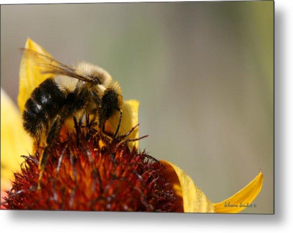Bee Four Metal Print by Silvana Siudut