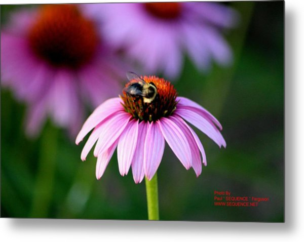 Bee Right Metal Print