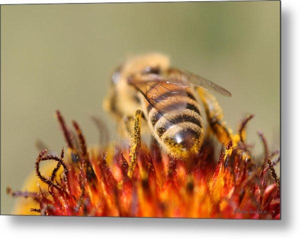Bee Three Metal Print by Silvana Siudut