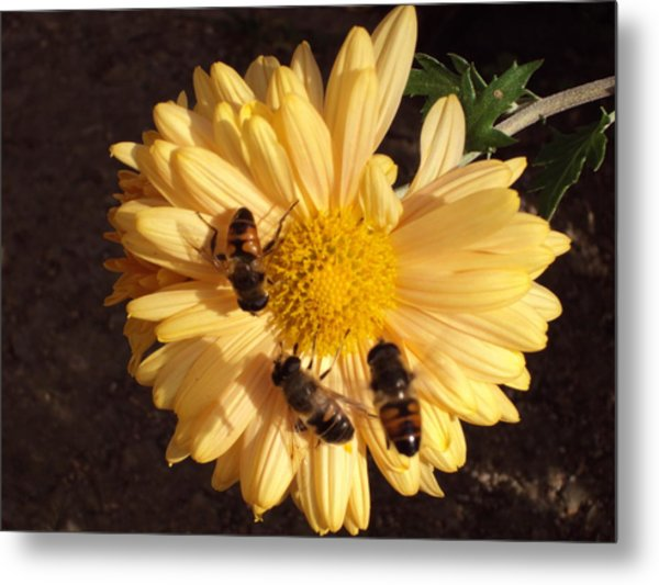Bees On Feast Metal Print by David Du Hempsey