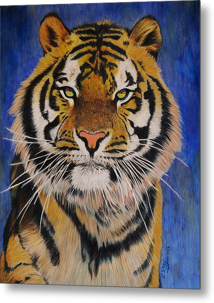 Bengal Tiger Metal Print by Don MacCarthy