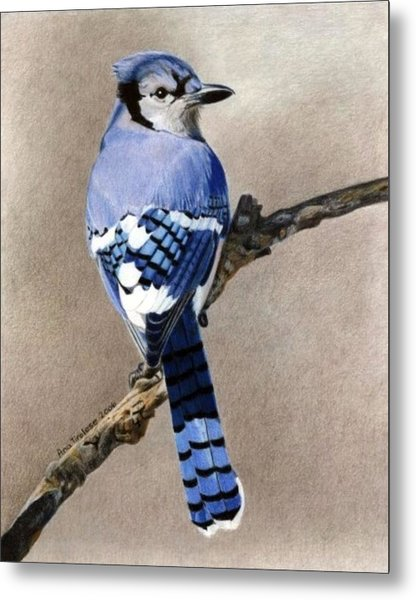 Big Blue Jay Metal Print
