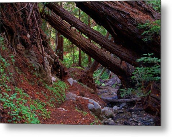 Big Sur Redwood Canyon Metal Print