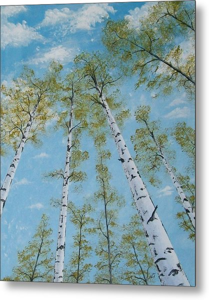 Birch Trees And Sky Metal Print