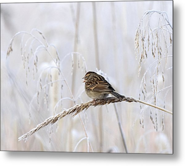 Bird In First Frost Metal Print
