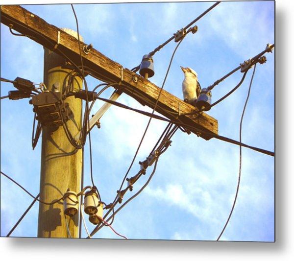Bird On A Wire Metal Print by Evguenia Men