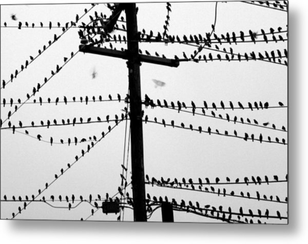 Birds On A Wire Metal Print by Don Prioleau