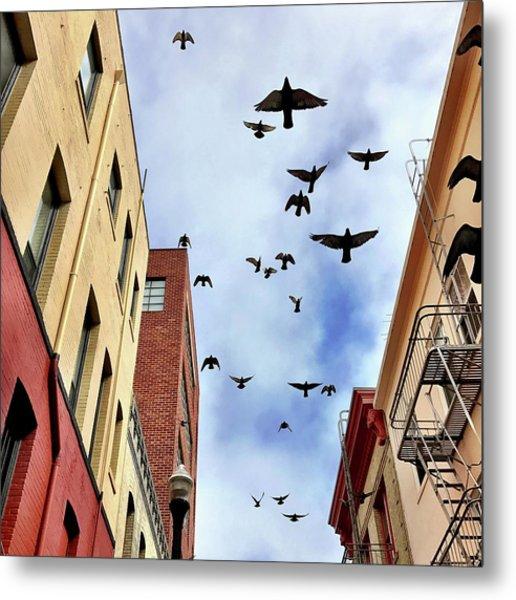Birds Overhead Metal Print
