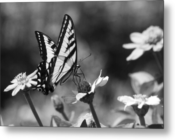 Black And White Butterfly On Flower Metal Print