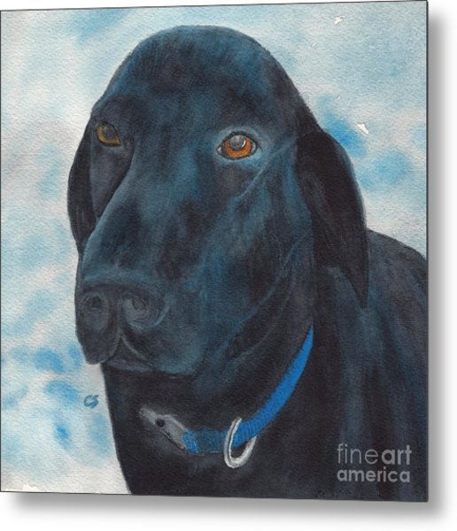 Black Labrador With Copper Eyes Portrait II Metal Print