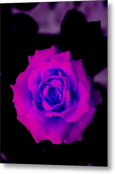 Bloom N Love Metal Print by Debbie May