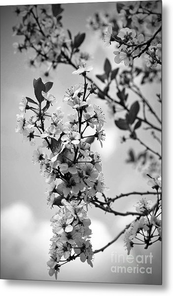 Blossoms In Black And White Metal Print