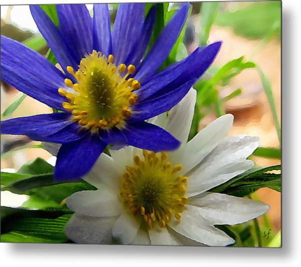 Blue And White Anemones Metal Print