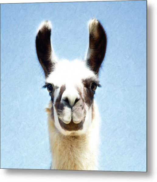 Blue Llama Metal Print