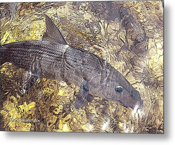 Bonefish World Metal Print by Alex Suescun