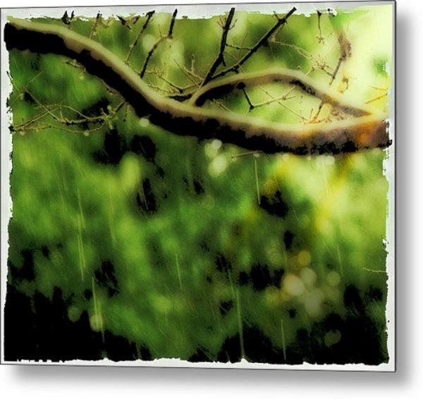 Branch In The Rain Metal Print by Ken Gimmi