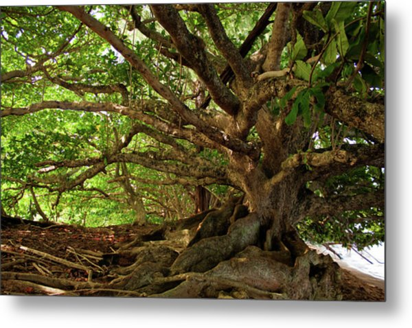 Branches And Roots Metal Print