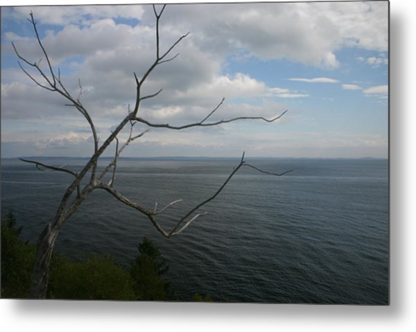 Branching Out Metal Print by Dennis Curry