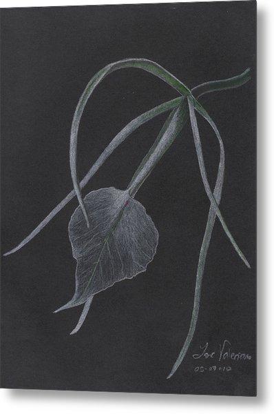 Brassalove Nordosa Orchid Metal Print