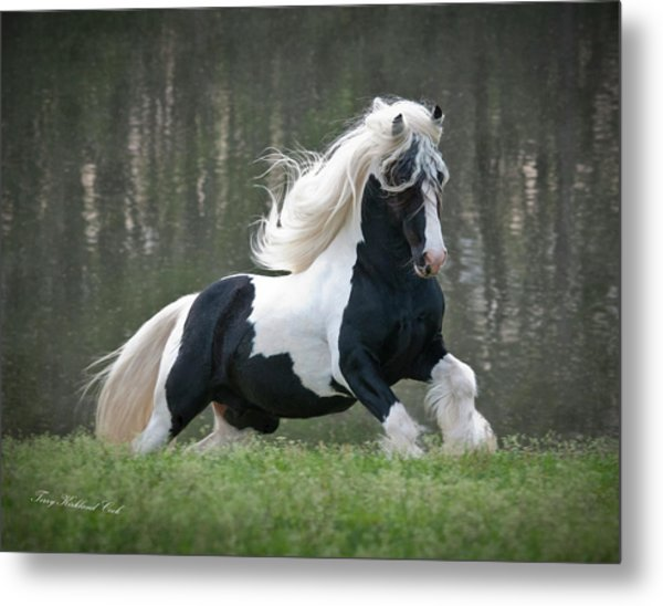Breathtaking Stallion Metal Print