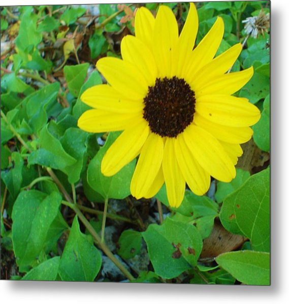 Bright Yellow Joy Metal Print