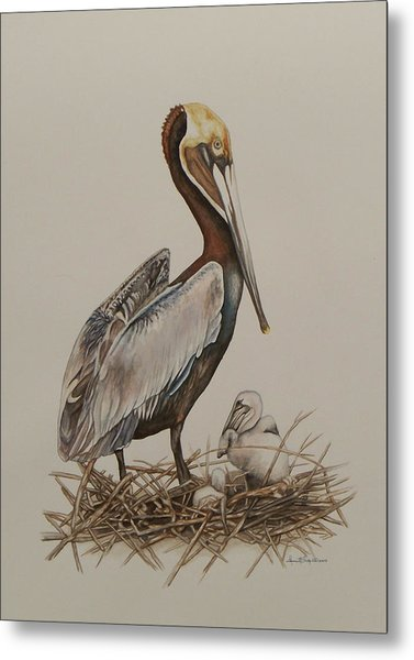 Brown Pelican And Chicks Metal Print