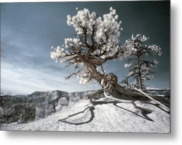 Bryce Canyon Infrared Tree Metal Print